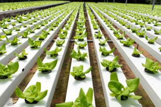bigstock-Hydroponic-Vegetable-46214644